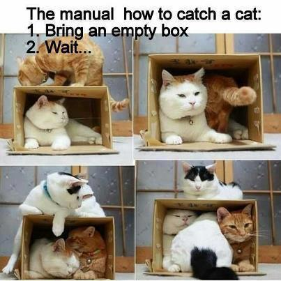 Image result for thursday cat images