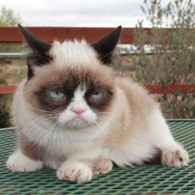 Grumpy cat mother tard grumpy cat