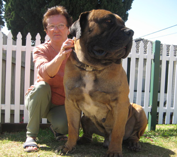Avalonia Waldor - the most beautiful Boerboel I have ever seen