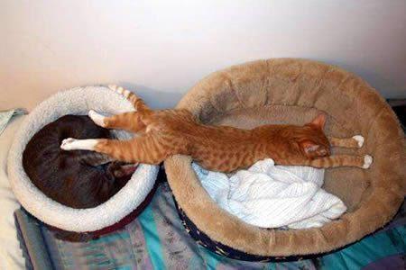 cute-funny-cat-sleeping-1