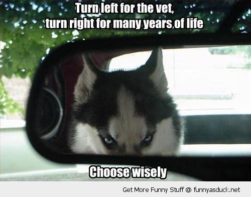 Dog Meme Husky Husky Funnies – Jane...