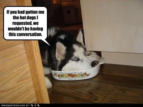 funny-dog-pictures-hotdogs-requeste
