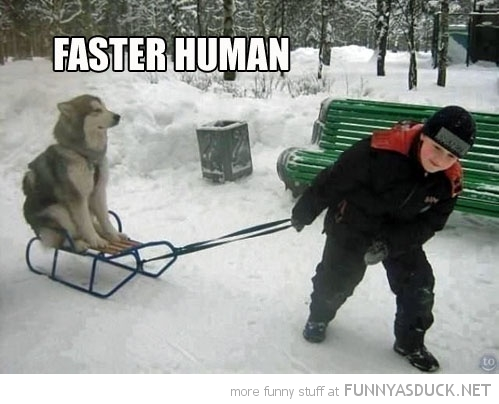Meme Funny Husky Dogs : Husky funnies u2013 janet carr @
