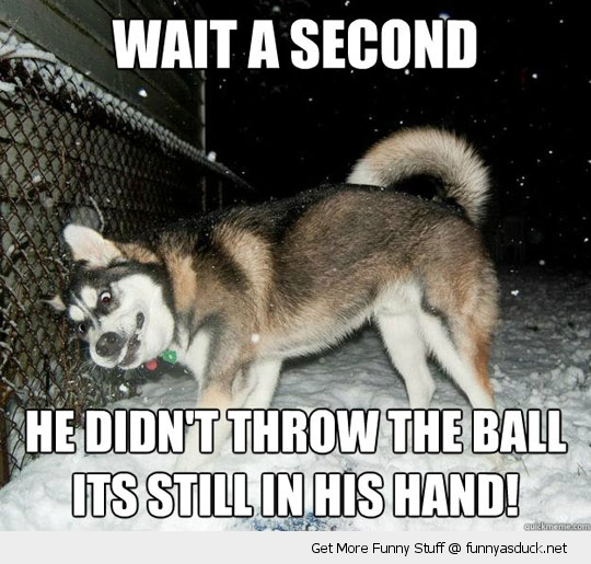 Go Back > Gallery For > Funny Husky Dog Pics With Captions