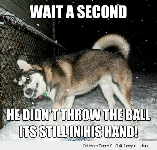 Husky Funnies (6/6)