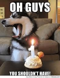 Husky Funnies (2/6)