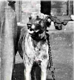 Linden 1939