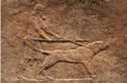 Mastiff stone relief