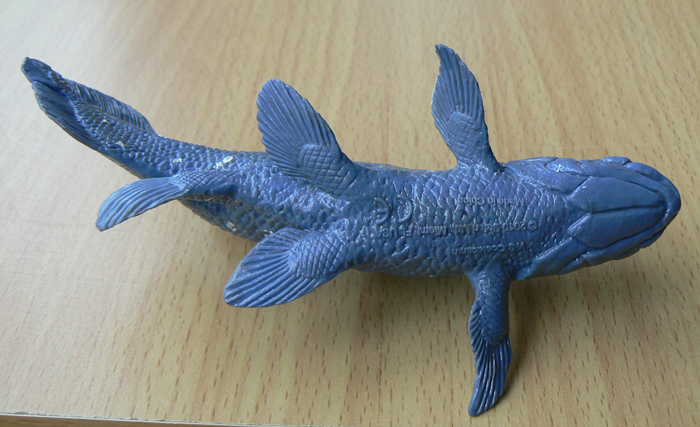 coelacanth_ws_safari3
