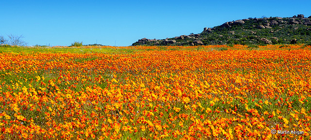 Westcoast Flower Tour, Namaqualand South Africa