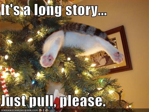 Cats and Christmas – Janet Carr @