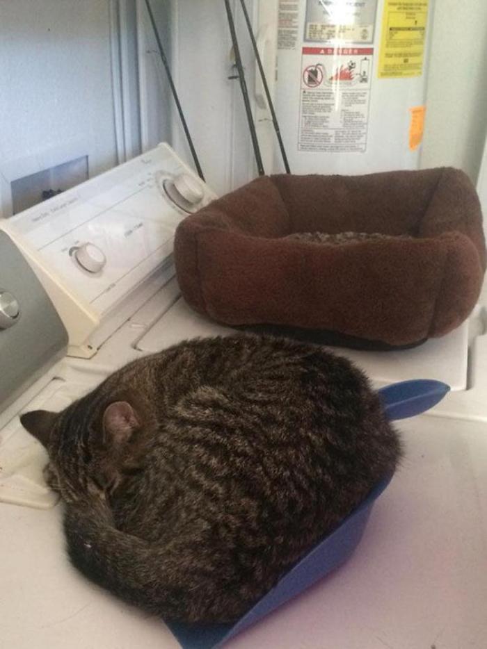 cat-logic-beds-4