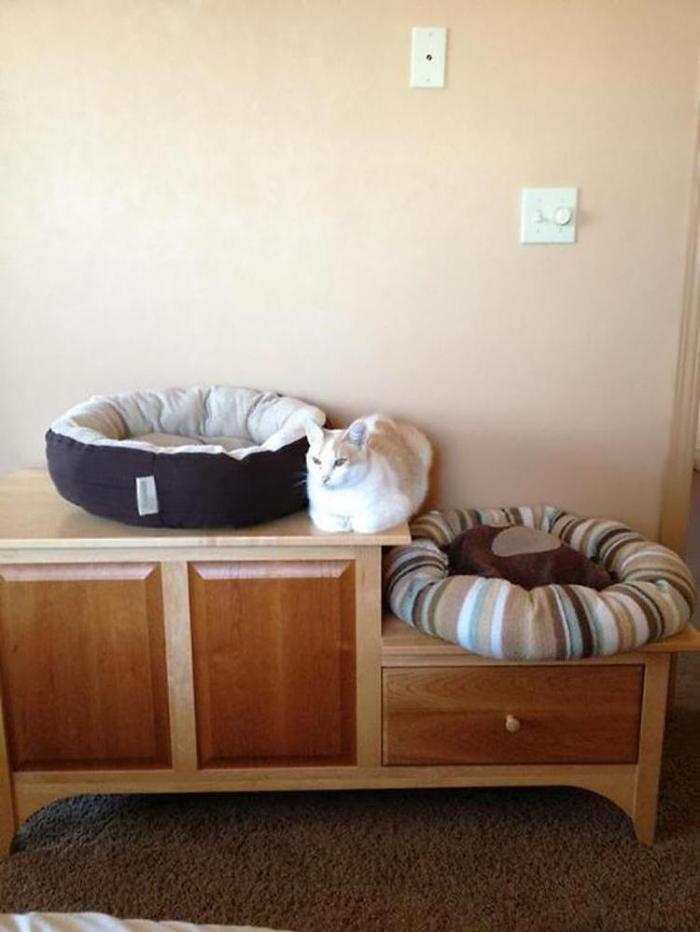 cat-logic-beds-6
