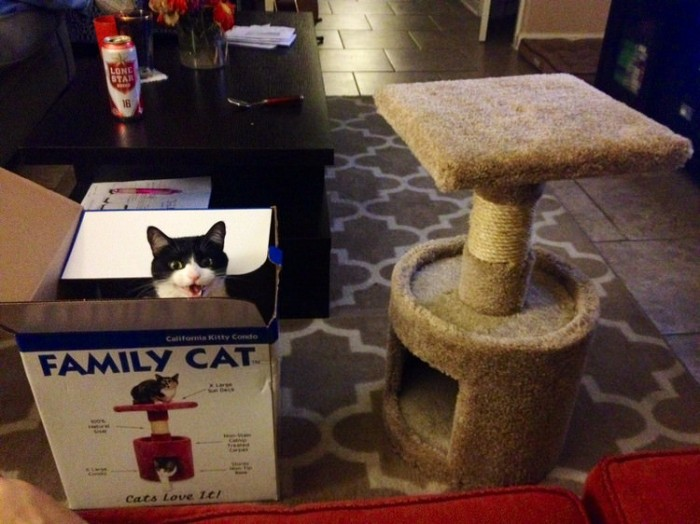 cat-logic-boxes-1