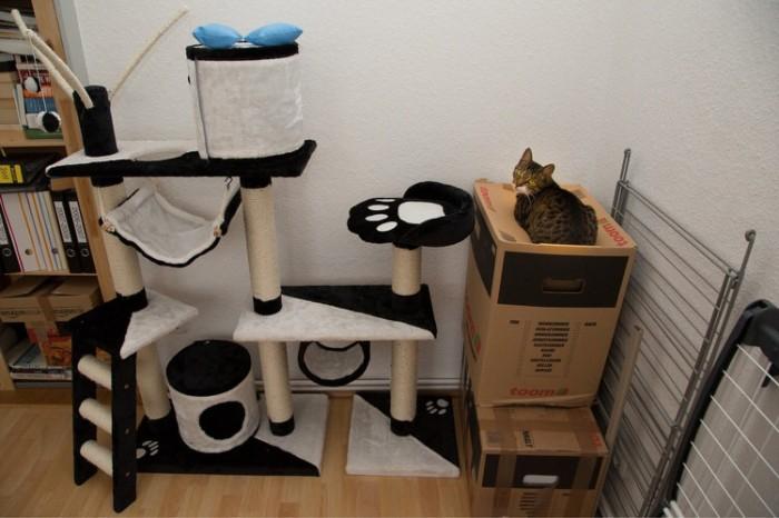 cat-logic-boxes-3