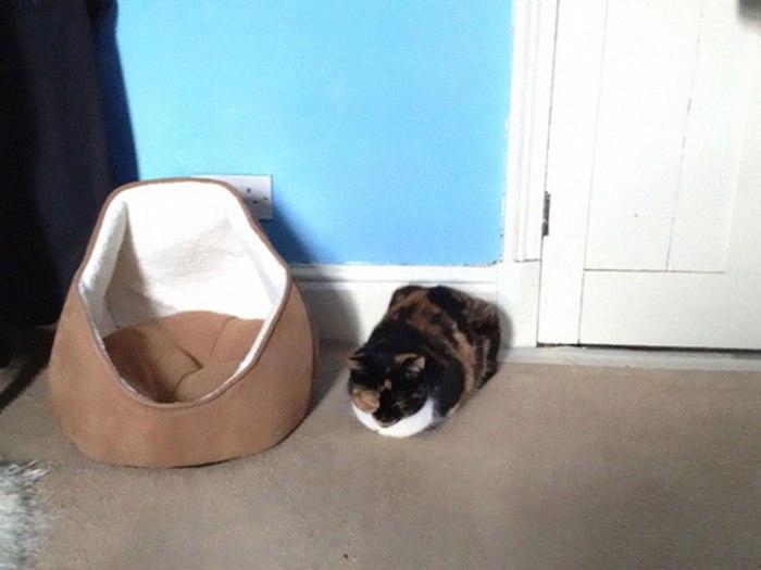 cat-logic-gifts-2