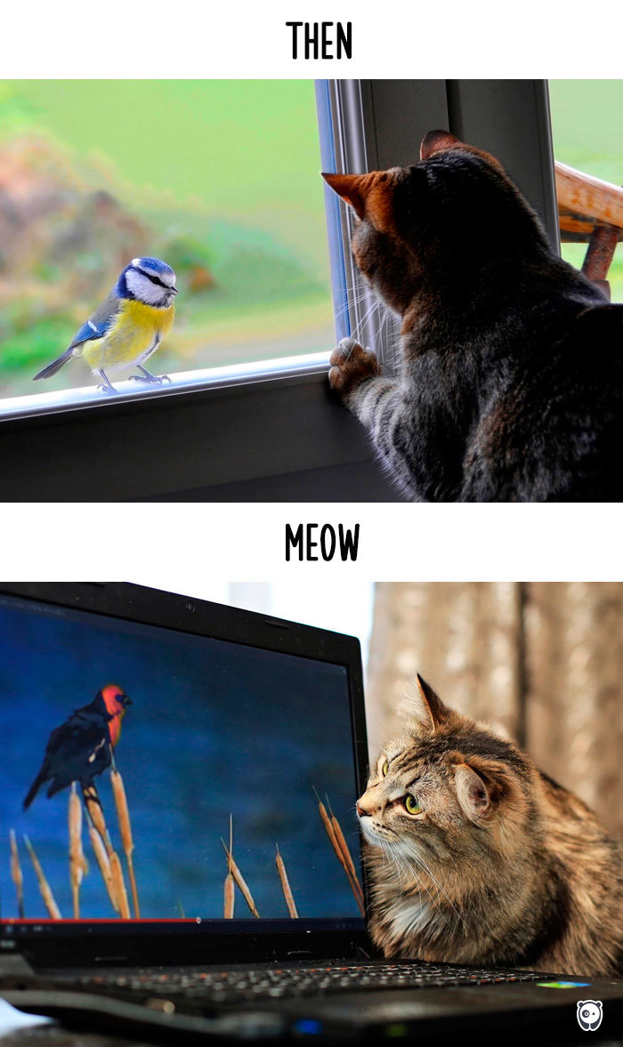 Cats-then-now-funny-technology-change-life-13-57162bb03575d__700