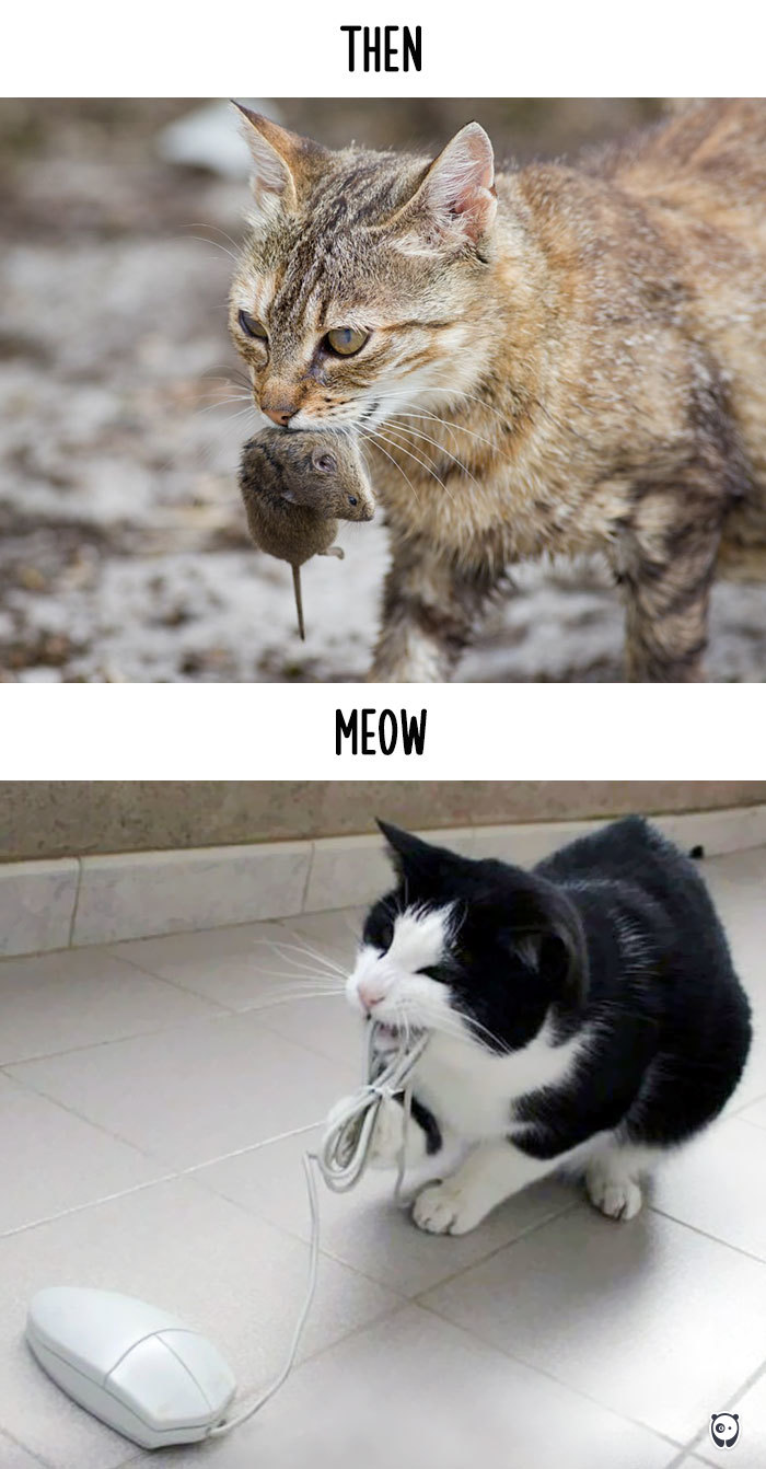 cats-then-now-funny-technology-change-life-19-571621075a8cd__700