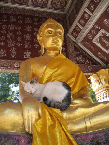 animals-buddha-and-cat-via-Jen-C.