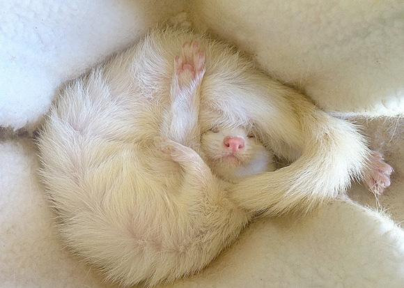 animals-sleeping-2