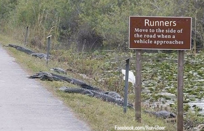animals-via-George-Running-in-Florida-doesnt-look-that-appealing.