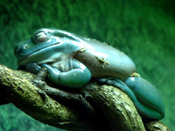 sleep-frog