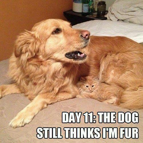 Cat-Dog-Meme-20