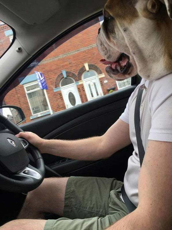 perfectly-timed-dog-head-car