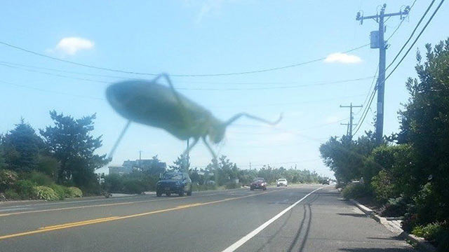 perfectly-timed-giant-bug-city
