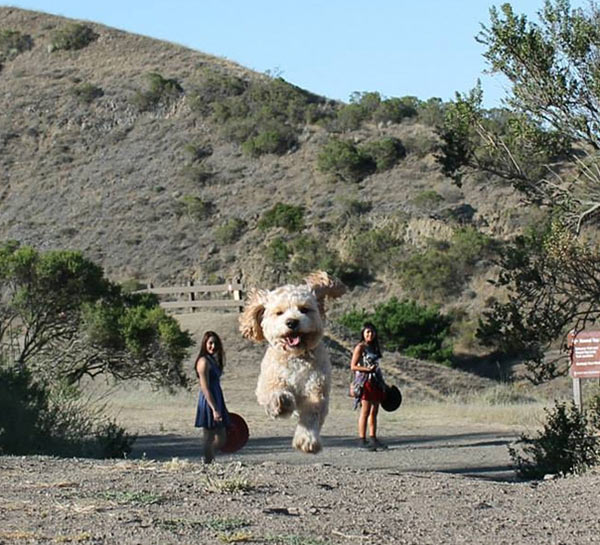 perfectly-timed-running-dog-giant