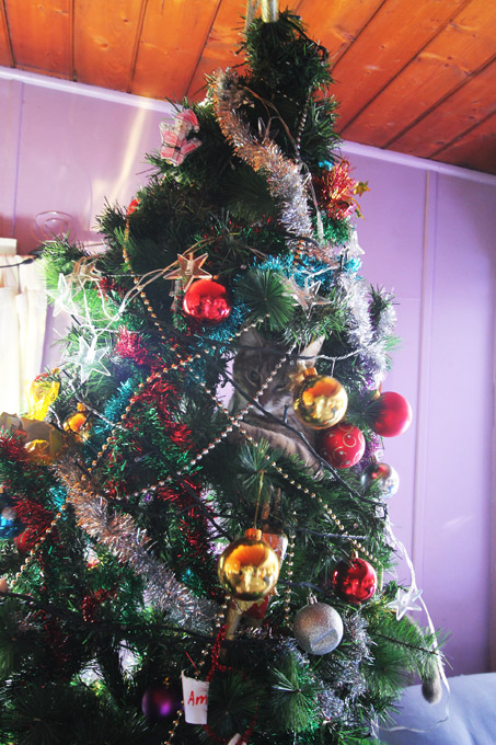 alfred-in-the-xmas-tree-008