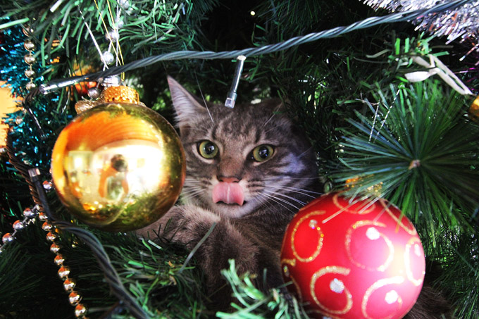 alfred-in-the-xmas-tree-013