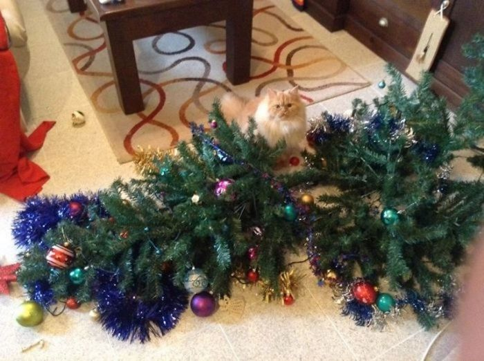 pay-cats-and-dogs-that-destroy-christmas