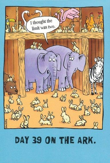 rabbits-on-ark