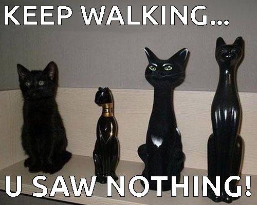 keep-walking-hoomin-u-saw-nothing-funny-black-cat-meme