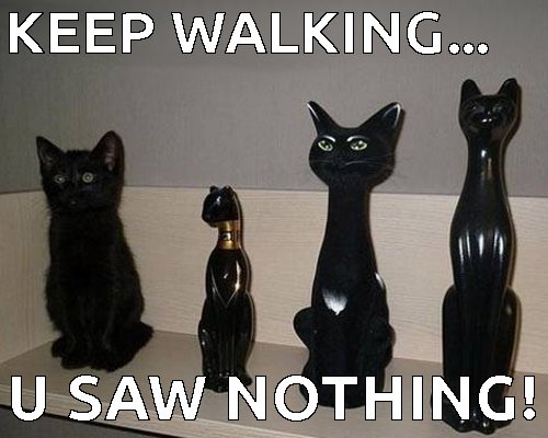 keep-walking-hoomin-u-saw-nothing-funny-black-cat-meme